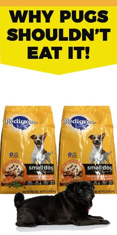 Pedigree offers food for all pets, from dogs, cats and even puppies. Small Dog Breeds, Small Dogs, Dog Vegetables, Foods Dogs Can Eat, Pedigree Dog Food, Pug Accessories, Types Of Dog Food, Black Pug, Pug Love