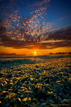 YouPic - My Own Kind of Paradise by PhilKoch