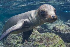Galapagos Island Snorkelling  #Galapagos #travel2next