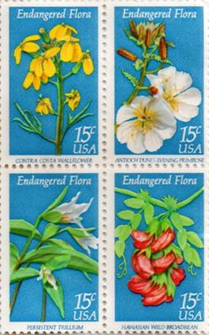 US Postage Stamp, 15 cents, Endangered Flora, Contra Costa Wallflower, Anticoch Dunes Evening Primrose, Persistent Trillium, Hawaiian Wild Broadbean.  Issued 1979.  Scott Catalog 1783 to 1786.