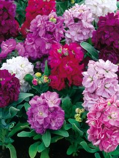 8 Best Year Round Flowers Images Year Round Flowers Annual