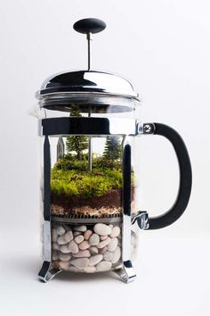 DIY Coffee Press Terrarium | Home Decor Accessories You Can DIY to Brighten Your Living Room