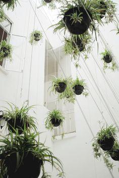 Hanging #plants installation
