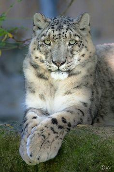 Look at those big and soft paws!