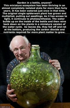 Terrariums; http://www.dailymail.co.uk/sciencetech/article-2267504/The-sealed-bottle-garden-thriving-40-years-fresh-air-water.html
