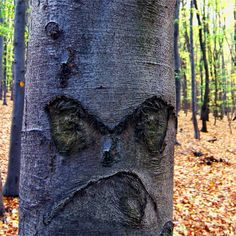 5 trees that look like people: the perfect chefs for natural ...