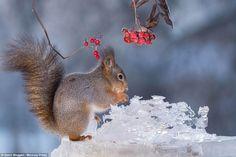 """""""O GRITO DO BICHO"""": Veja a beleza impressionante de esquilos em jardin... #ogritodobicho #falabicho"""