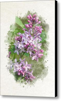 Lilac Watercolor Art Canvas Print / Canvas Art By Christina Rollo