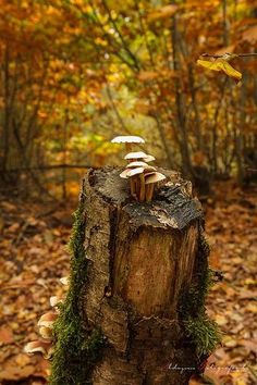 Tree stump in the woods