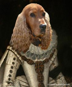 Queen Cocker Spaniel is so beautiful she deserves many portraits  #cockerspaniel  Gallery | yourpetinuniform.com