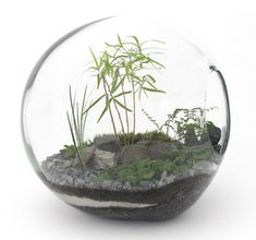 james-modern-terrariums-terrarium
