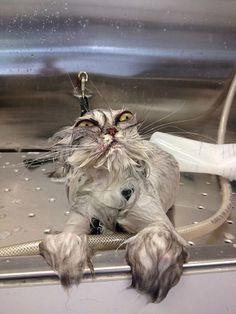 まるで別の生き物なびしょ濡れネコ