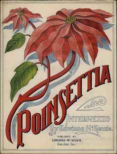 Poinsettia by RetroRocketeer, via Flickr