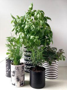 Herb garden | Jardin de fines herbes | PROJET PASTEL