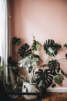 You are in the right place about house plants decor fiddle leaf fig Here we offer you the most beautiful pictures about the house plants decor low lights you House Plants Decor, Plant Decor, Amazing Gardens, Beautiful Gardens, Murs Roses, Turbulence Deco, Decoration Plante, Deco Boheme, Afraid Of The Dark