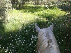 Tenemos una primavera espectacular en Arenas de San Pedro