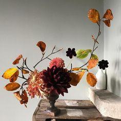 How different it looks in the morning light #britishflowers #seasonalfloweralliance
