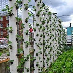 Faça hortas verticais, plantando em canos de PVC...(basta fazer furos com serra copo e encher com substrato,plantando uma muda em cada furo)