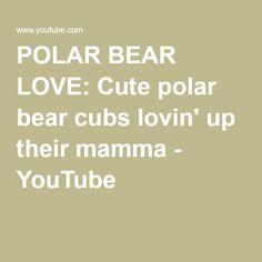 POLAR BEAR LOVE: Cute polar bear cubs lovin' up their mamma - YouTube