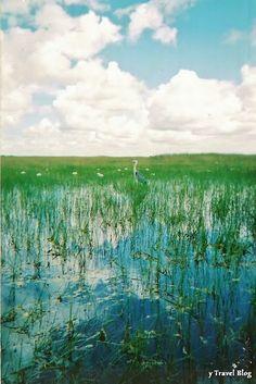 Everglades National Park, #Florida from YTravel Blog.