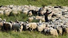 Students in some Romanian villages get longer summer holidays for transhumance School Summer Holidays, Secondary School, Romania, Students, Christians, Middle School, High School