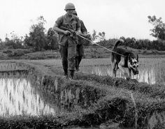 Military working dog and soldiers on patrol.  Vietnam 1969