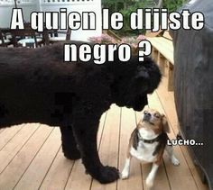 A quién llamaste negro?