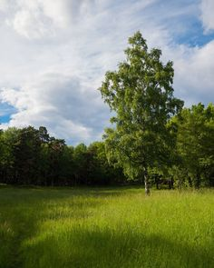 Long time no see and soon I'll be free!  . . #stockholm #gh5 #lumixgh5 #lumix_id #lumixstories #lumixlounge #panasonic #panasonicgh5 #lumixnordic #perspective #nature #landscapephotography #lumix #landscape #landscapephotography #colors #colorful