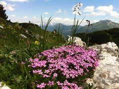 Einzigartige Flora in der Flachauer Bergwelt Salzburg, Flora, Plants, Health, Kids, Tourism, Landscape, Vacation, Summer