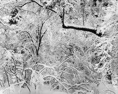 Ansel Adams Fresh Snow, Yosemite National Park, CA 1947 National Parks