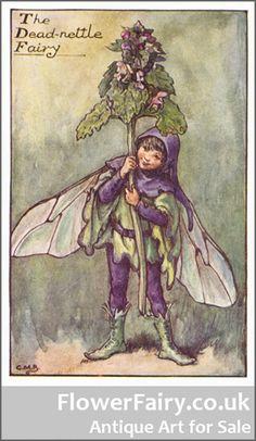 Dead-Nettle Flower Fairy, original antique print.
