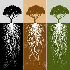 Tree Root Stock Photos, Pictures, Royalty Free Tree Root Images ...
