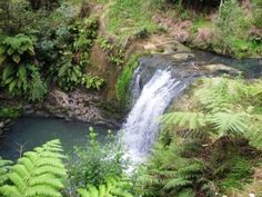 Oakley Creek waterfall, Auckland, New Zealand. We have two short walk loops here, that you can make into a longer one