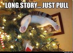 Holidaze - ROFLCAT - Funny Cat Pictures