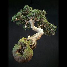 "Patrick Bergsma ""Roots""(back)"