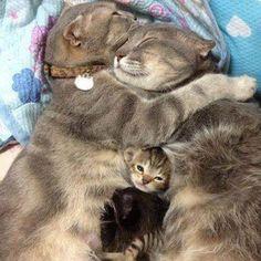 Mutlu aile tablosu:)