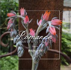 Romance-Awareness-Month-Freytags-Florist