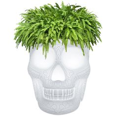 Qeeboo Mexico Skull LED Outdoor Planter (21.580 RUB) ❤ liked on Polyvore featuring home, outdoors, outdoor decor, white, skull head planters, mexican patio decor, skull planter and mexican planters