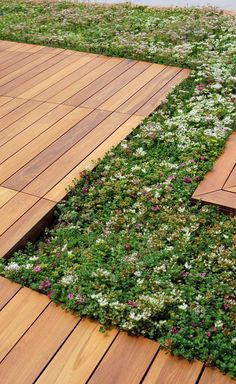 Ipe deck and sedum LiveRoof trays at the International Place Roof Terrace in Boston, MA.