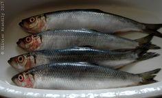 Dès le printemps et jusqu'à la fin de l'été, les étals des poissonniers proposent ces petits poissons goûteux, appréciés de tous et pourvus de « bon » gras.