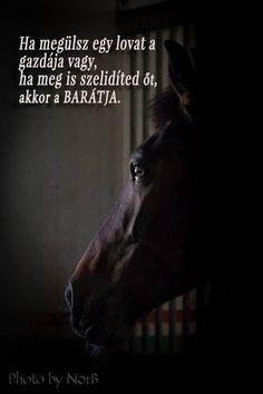 Ha megülsz egy lovat a gazdája vagy,ha meg is szelídíted őt, akkor a BARÁTJA.