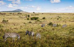 Zebra's Pasture by DHaug, via Flickr