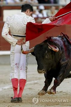 BULLFIGHTING.... disgusting torture of an animal for the sake of hiuman entertain.ment #spainbullfighting