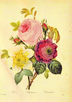 Rose Anemone Clematis Flower Bouquet Vintage Illustration Wildflower Lithograph Poster Redoute Botanical Print To Frame 76 Vintage Botanical Prints, Botanical Art, Vintage Prints, Vintage Floral, Botanical Flowers, Canvas Prints, Framed Prints, Art Prints, Art Rose