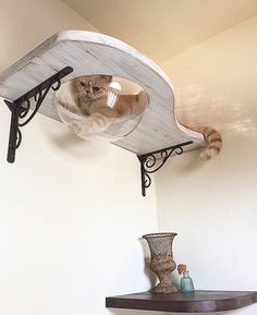 Cat can see what's going on around her and be up high like all cats love to be!