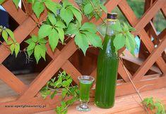 Celery, Vogue, Vegetables, Bottle, Home Decor, Decoration Home, Room Decor, Flask, Vegetable Recipes