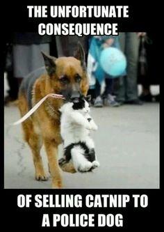 Police dog brutality