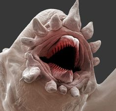 microscopic bristle worm. Oh good god no. >.< I'm trying to make it less nightmare inducing by giving him a nice name, only I can't think of one.