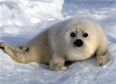 ocean animals - Bing Images