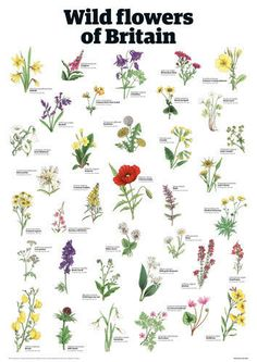 Wild flowers of Britain Art Print by Guardian Wallchart Easyart.com